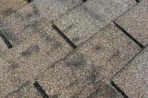 Discolored asphalt shingles