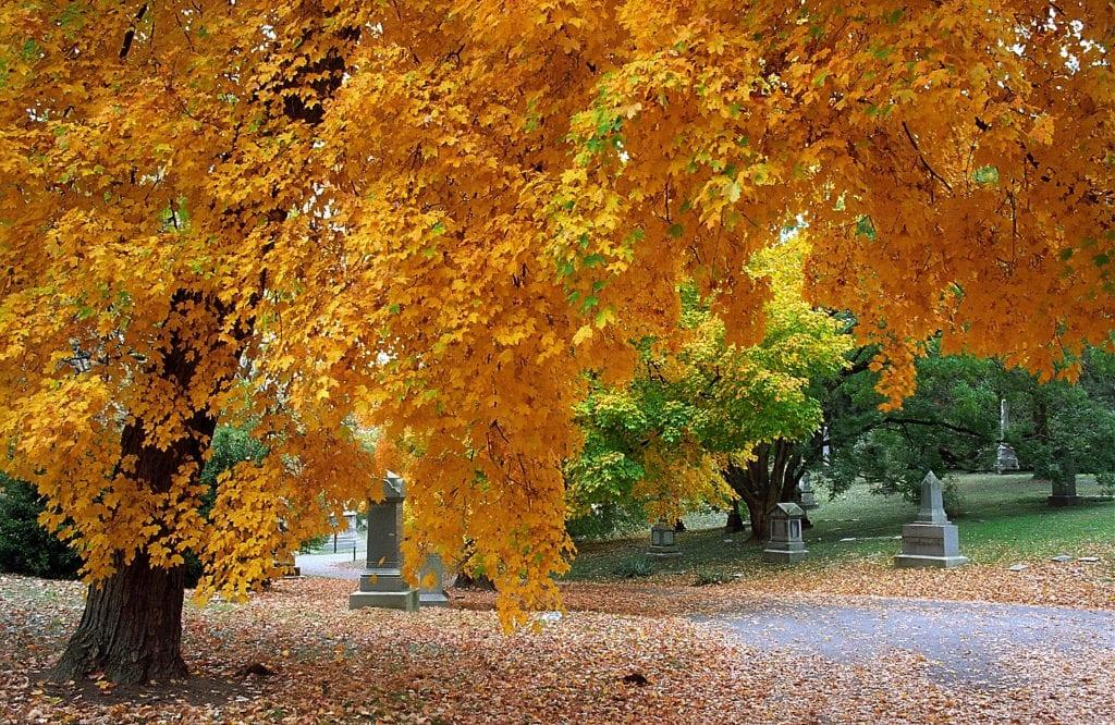 Spring Grove Cemetery 2 - Fall Leaves Cincinnati