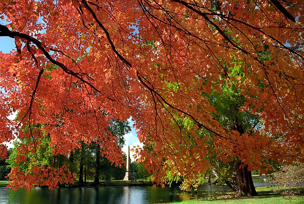 Spring Grove Cemetery - David Ohmer - Fall Leaves Cincinnati